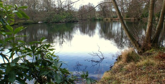 Swinton Park:                   Lakeside