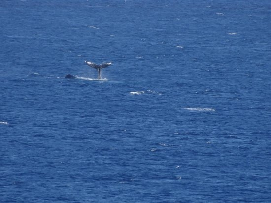 Royal Kahana:                   Whale tail from lanai