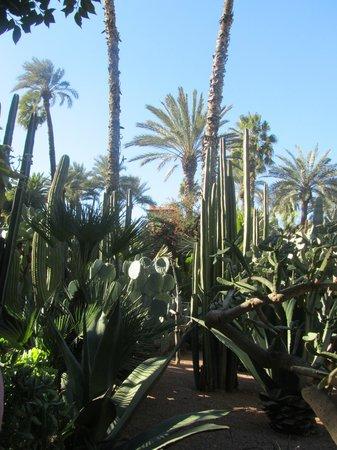 Riad Dollar Des Sables:                                                       La jardin Marjorelle - Maginifique