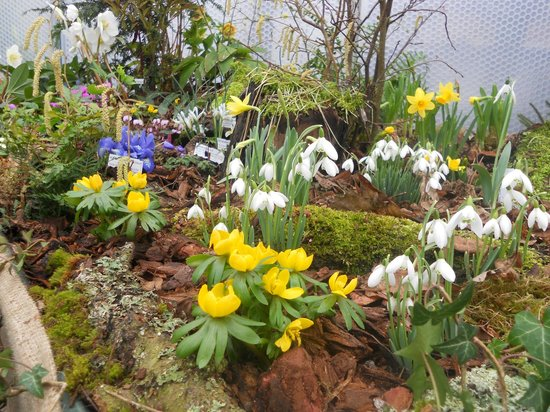 Castle Bromwich Hall Gardens: Snowdrop display