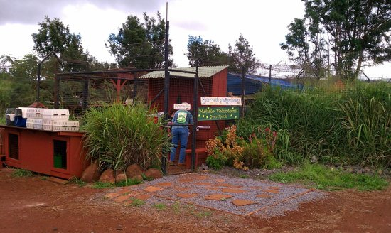 Lanai Cat Sanctuary:                   Entrance