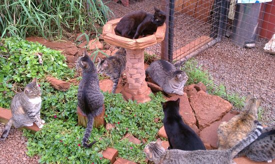 Lanai Cat Sanctuary:                   Greeters