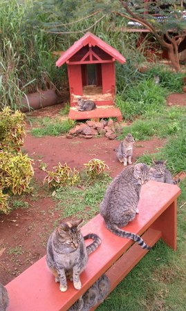 Lanai Cat Sanctuary:                   More greeters