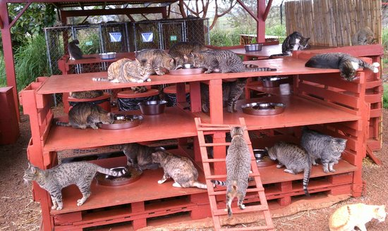 Lanai Cat Sanctuary:                   Food time