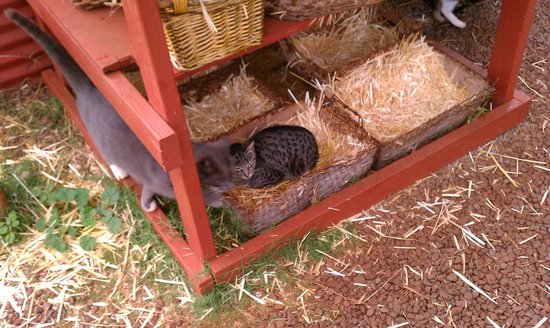 Lanai Cat Sanctuary:                   Sleeping baskets