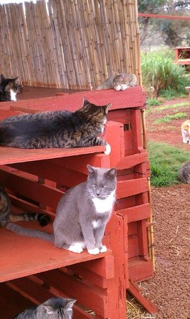 Lanai Cat Sanctuary:                   Pierre was charming