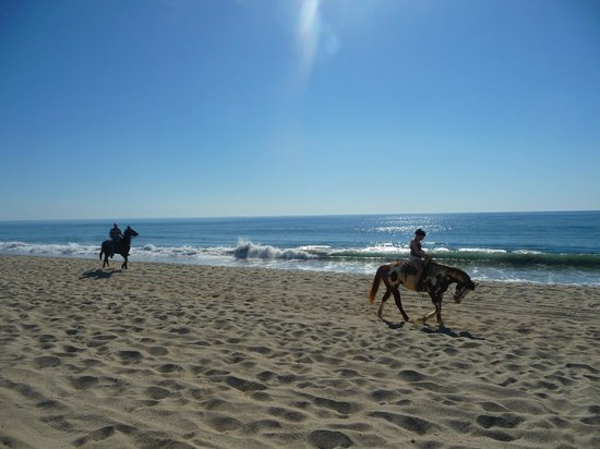 Holiday Inn Resort Los Cabos All-Inclusive:                   horseback riders..looking for customers