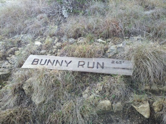 Wimberley Zipline Adventures:                   Bunny Run