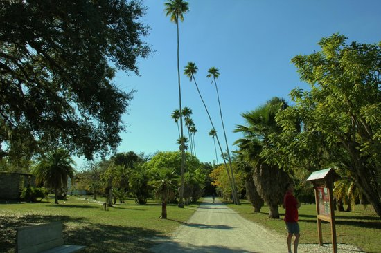 Koreshan State Historic Site:                   a walkway lined with washingtonia(?) palms