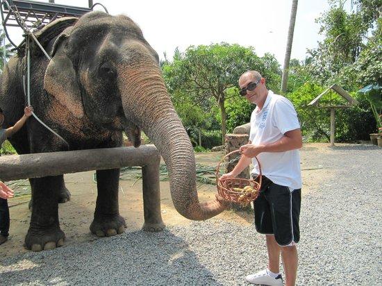 Centara Villas Samui: ELEPHANT TREKKING