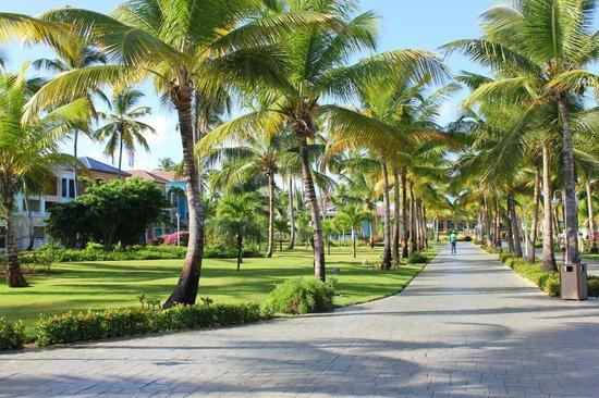 Ocean Blue & Sand:                   Jardines