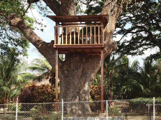 Finca Los Genizaros Farm Stays: Tree house