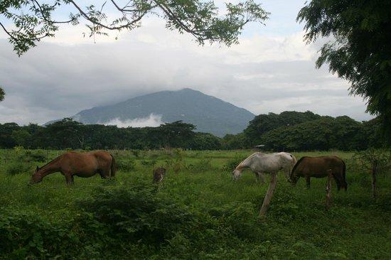 Finca Los Genizaros Farm Stays: Mombacho Volcano