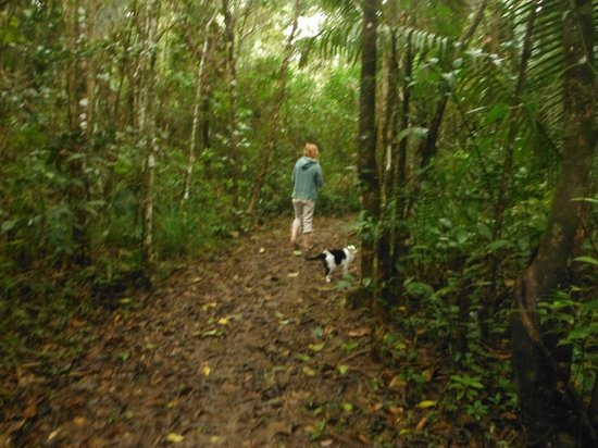 Hickatee Cottages :                                     Exploring the jungle trails, with one of the Hickatee cats p