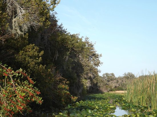 Wild Willy's Airboat Tours: View from the boat - Wild Willy's Airboat Tour