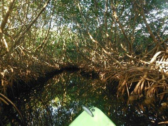 Luminita Kayak Biobay Tours:                   mangroves