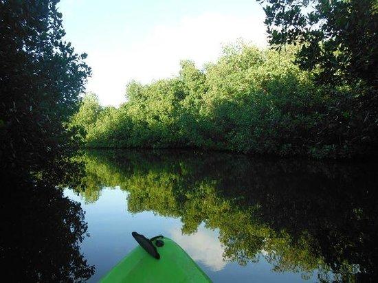 Luminita Kayak Biobay Tours:                   clearing in the mangroves