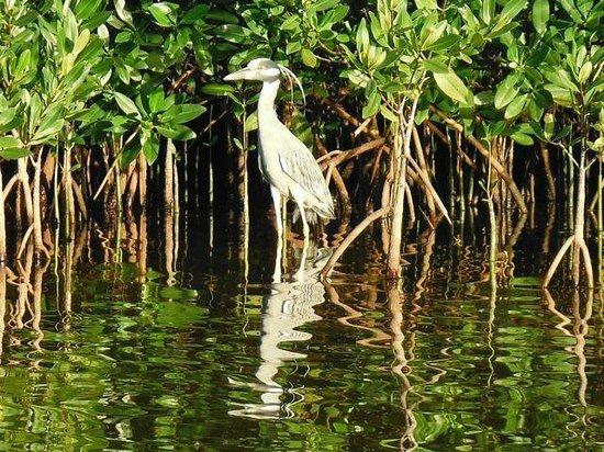 Luminita Kayak Biobay Tours:                   water bird