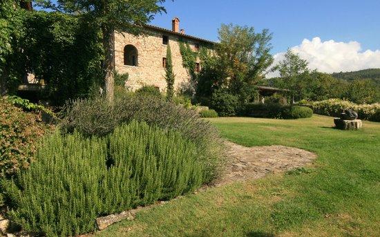 Borgo Corsignano:                   Lavender in the grounds