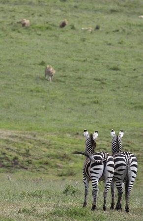 andBeyond Ngorongoro Crater Lodge:                   Those were concerned zebras... ;)