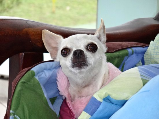 Ensuenos Del Mar S.A.: Old guard dog modeling her pink jacket