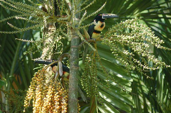 Chachagua Rainforest Eco Lodge:                   Aracari at Dining Room
