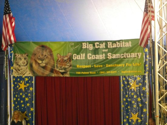 Big Cat Habitat and Gulf Coast Sanctuary: big cat banner