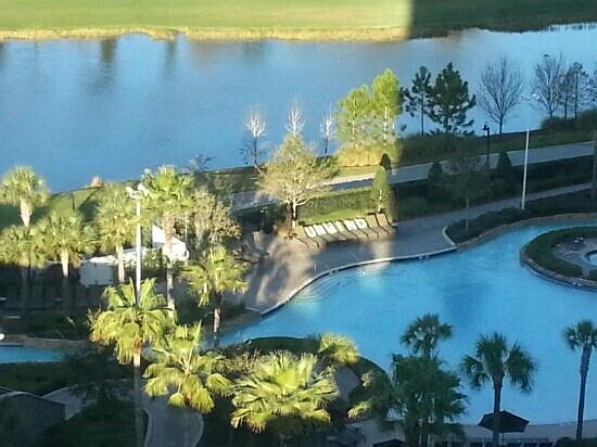 Hilton Orlando Bonnet Creek:                   Greetings every morning from the pool
