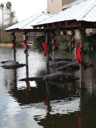 Gatorland: All decked out for the holiday season