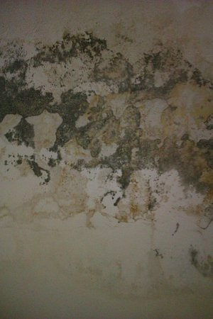 Vientiane Travellers House : Wall in the Staircase