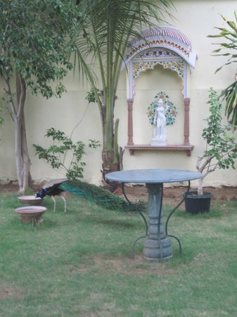 Hotel Anuraag Villa:                   Peacock in the garden