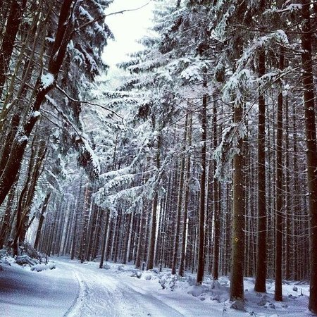 Holiday Valley:                   Gorgeous snowy forest