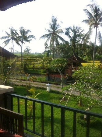 Bhanuswari Resort & Spa:                   View across the rice fields from balcony