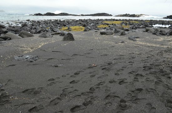 Discover Hawaii Tours: The Black Sand Beach