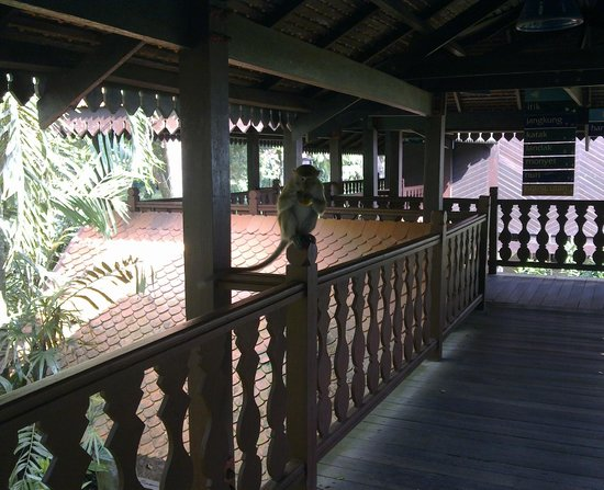 Club Med Cherating Beach:                   the resort is located in a forest, so guests can see many cute monkeys when th