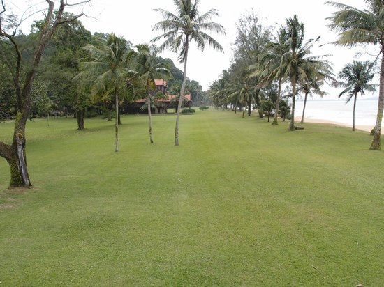 Club Med Cherating Beach:                   nice green along the beach