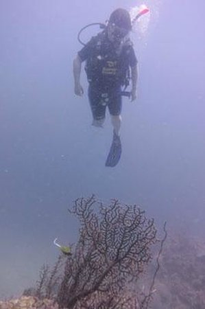 Super Divers:                   diving above fan coral
