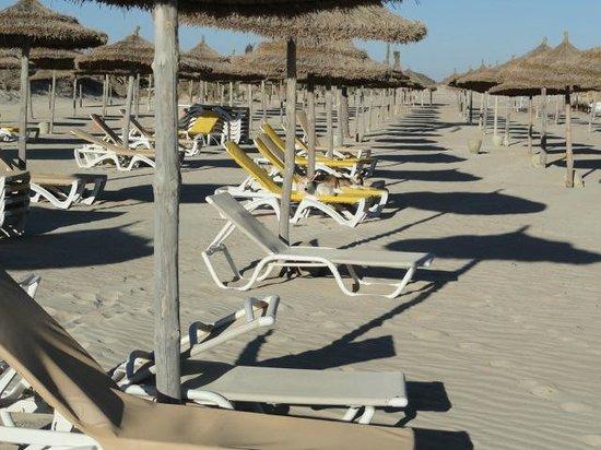 Seabel Rym Beach: les chiens sur les transats