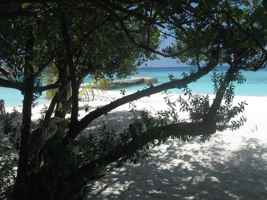 VOI Dhiggiri Resort:                   spiaggia