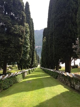 Villa d'Este:                   Fantastic avenue of cypress