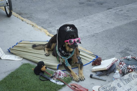 on Duval Street