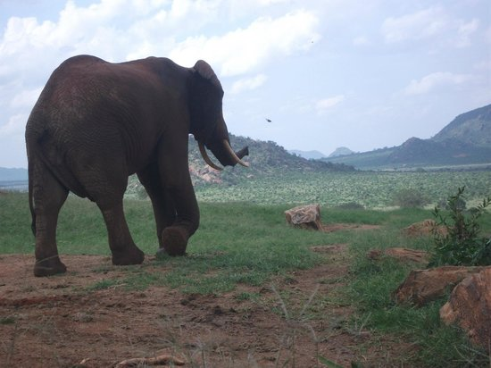 Voi Safari Lodge:                   close with the elephants