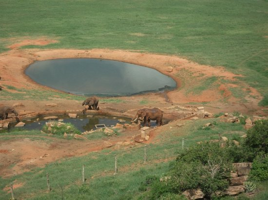 Voi Safari Lodge:                   elephants have a drink
