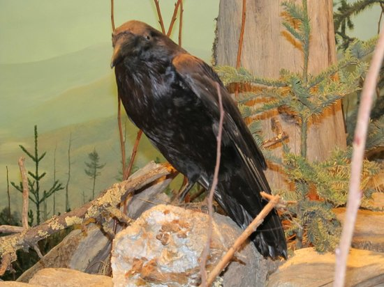 North Carolina Museum of Natural Sciences: Quote the Raven