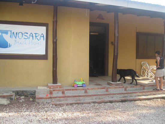 Nosara Beach Hostal:                                                       the entrance from the hostel with Canella