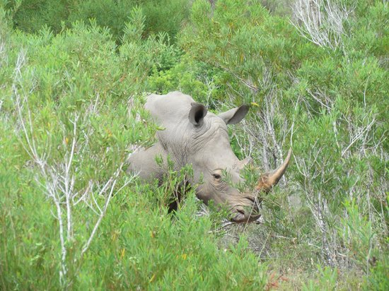 Nyaru Private Game Lodge:                   Rhino