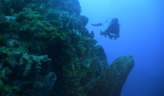 Saba Divers:                   The pinacles are impressive