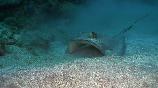 Saba Divers:                   Turtles, rays, sharks... if you are looking for big encounters, Saba is your p