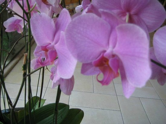 Loews Royal Pacific Resort at Universal Orlando:                   Orchids are throughout RPR, all real!