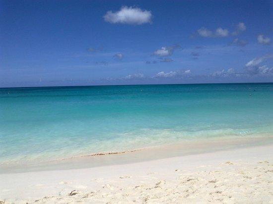 Bucuti & Tara Beach Resort Aruba:                   La spiaggia del Bucuti vista dal mio sdraio